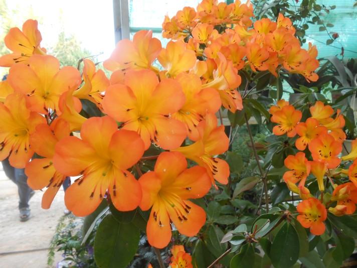 Orange flrs