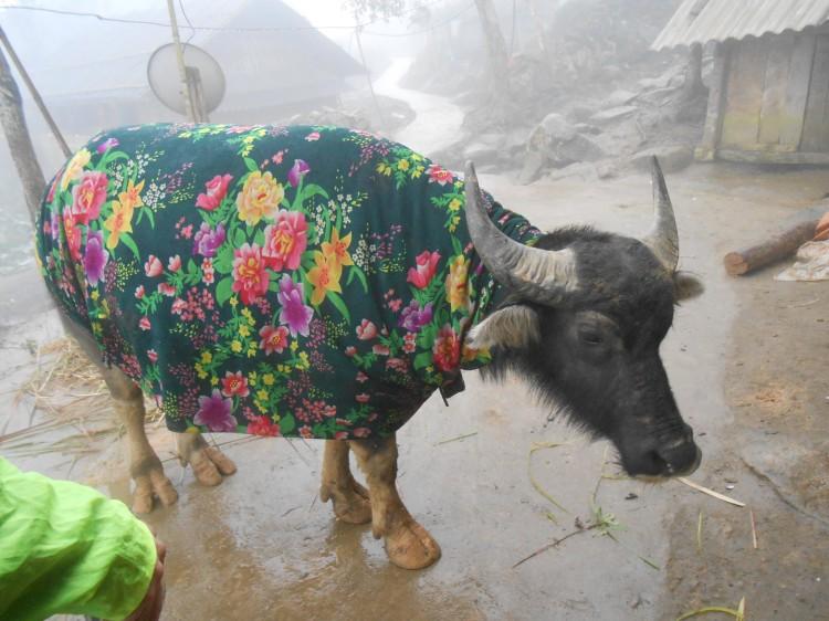 Flower buffalo