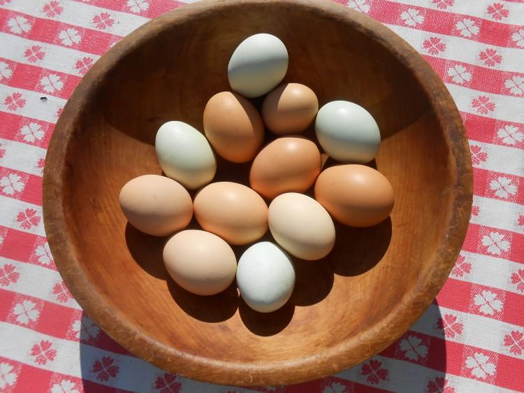 Nice eggs_1