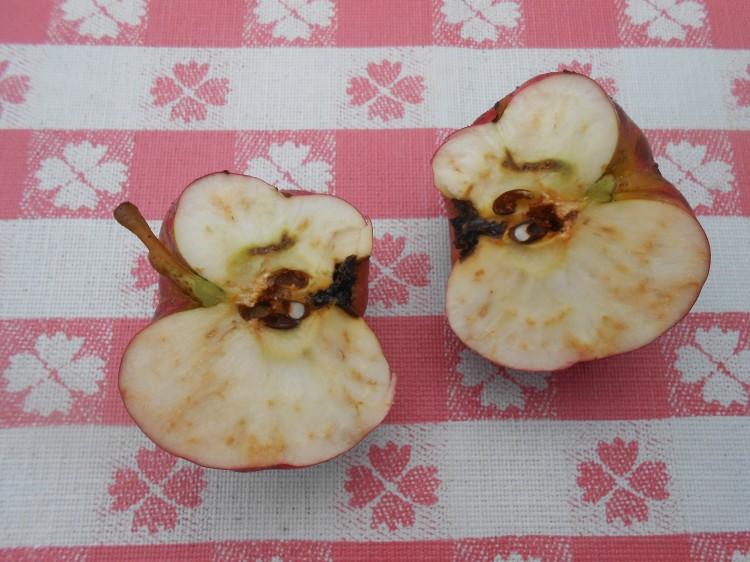 apple-halves-2