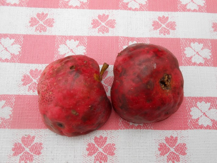 apple-halves-skin