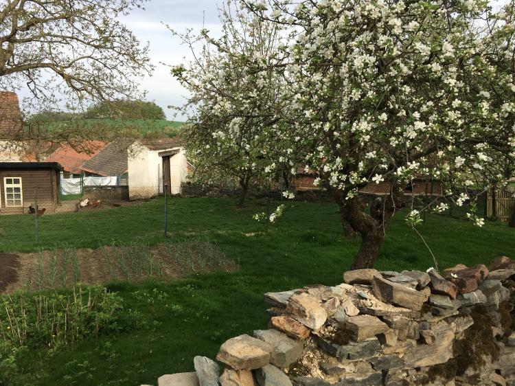 village apple