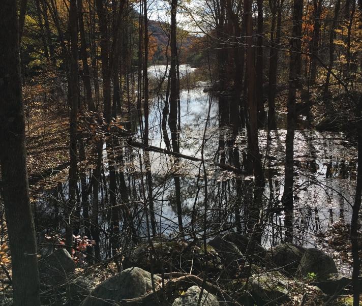 floodedpath.jpg